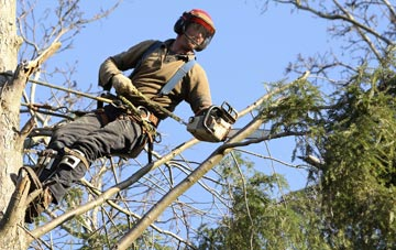 hiring experienced Hounslow West tree surgeons