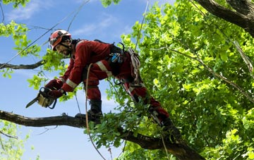 find trusted rated Hounslow West tree surgeons in Hounslow