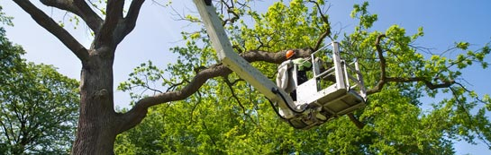 Hounslow West tree surgery services