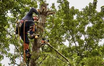 tree surgeon Hounslow West, Hounslow