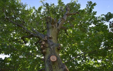 what is Hounslow West tree surgery?