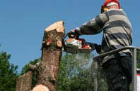Hounslow West felling services